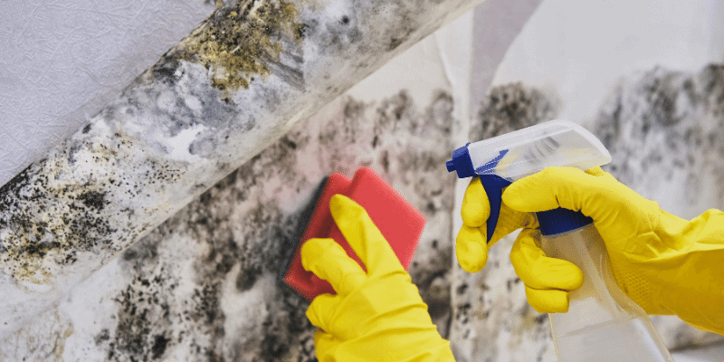 How to Test for Mold in an Apartment