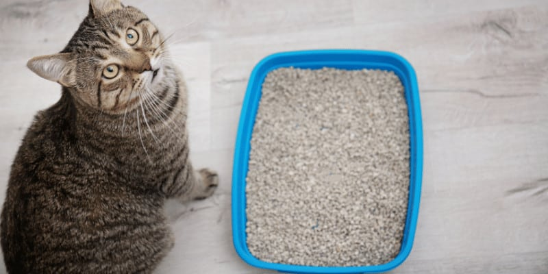 Where to Put a Cat Litter Box in a Small Apartment