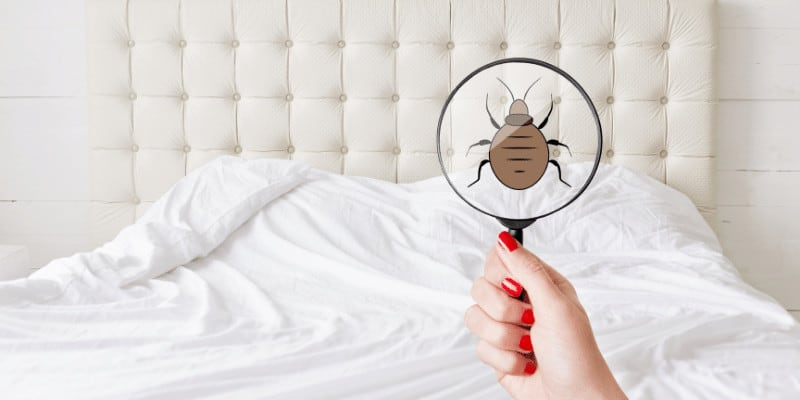 Who Is Responsible for Bed Bugs The Landlord or the Tenant