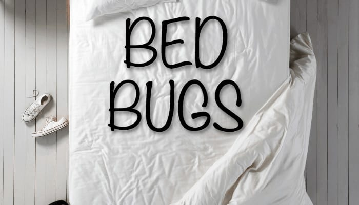 Who Pays for the Bed Bugs in Apartment Buildings
