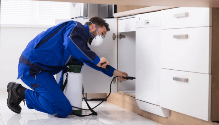 How Much Does Pest Control Cost for an Apartment