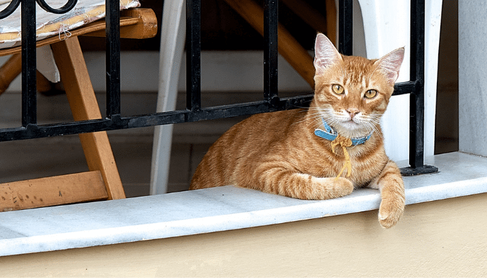 How to Cat-Proof an Apartment